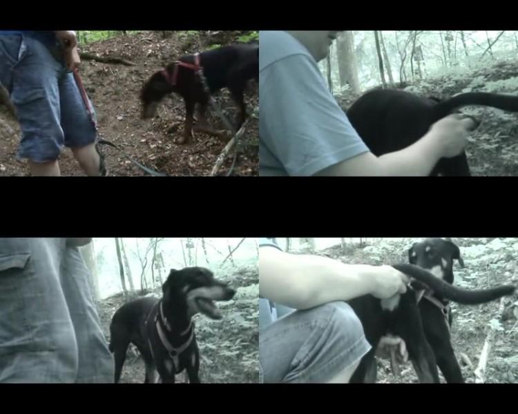 0505 ZooGay Doggy Ass Play Pt1 - Doggy Ass Play Pt1 - Male Bestiality