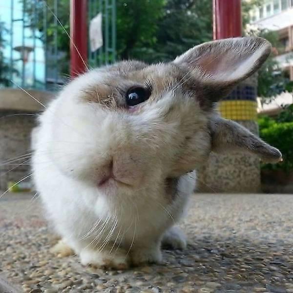 a-Bunny,