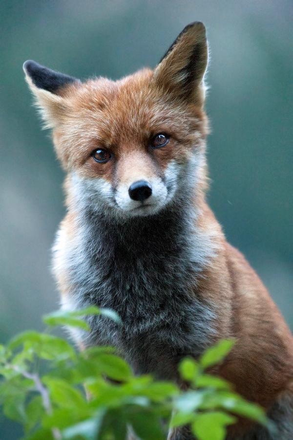 fox40,
