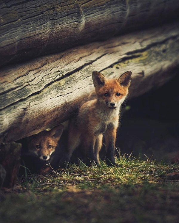 Fox127,