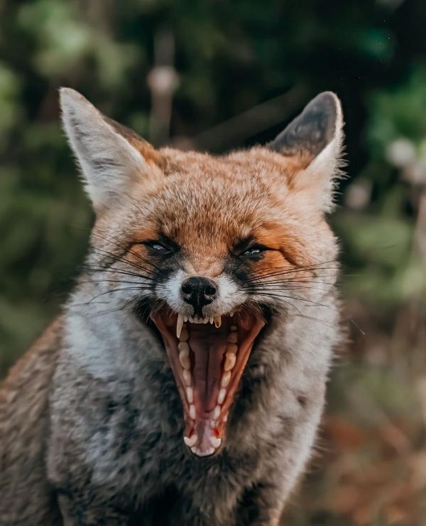 fox58,