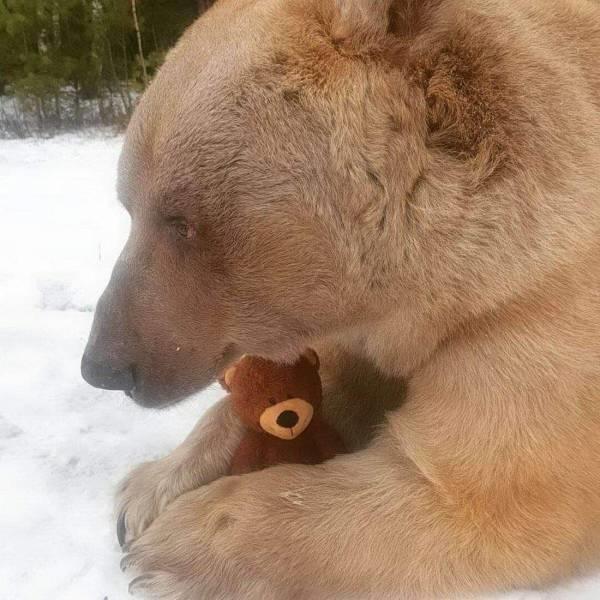 a-BearWithBear,